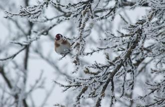 Les conseils d'un photographe naturaliste